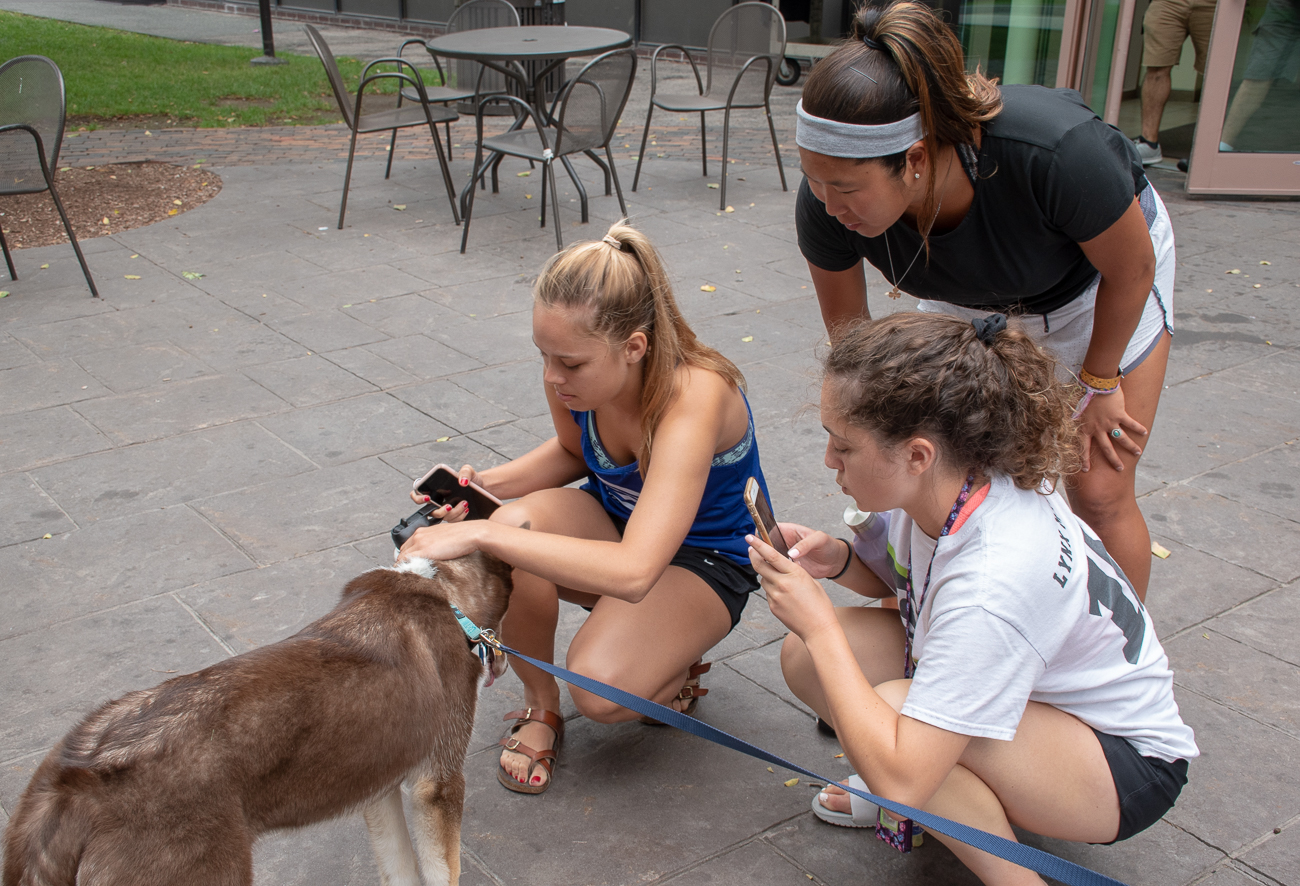 Three students crouch down to pet Ollie on Doble Quad.