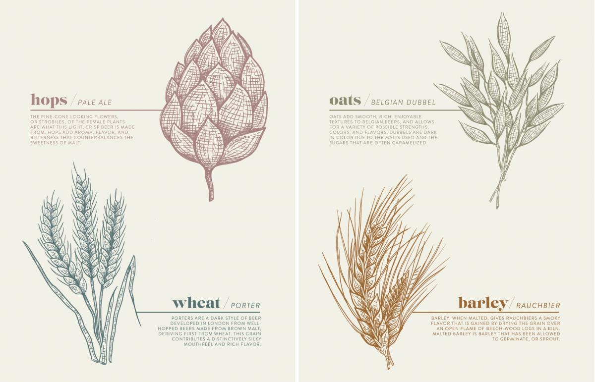 botanical illustration of different plants used to make beer