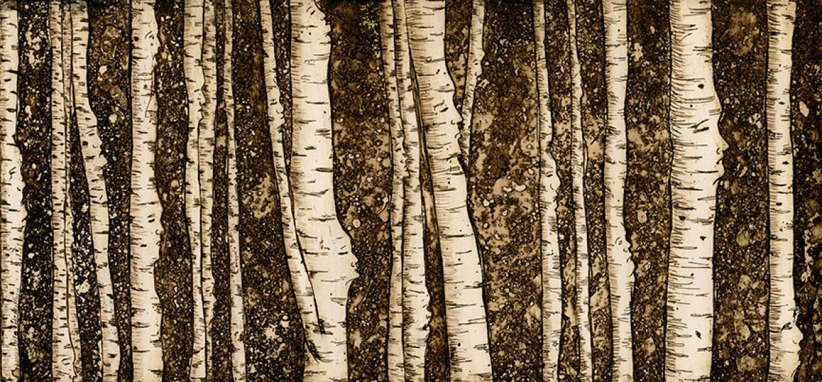 print of forest of birch trees