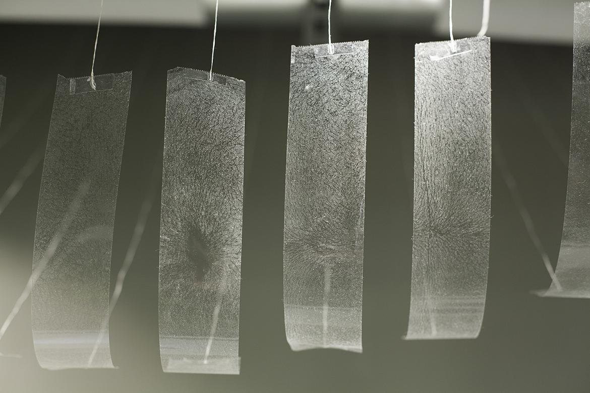 strips of tape hang from the ceiling with traces of skin and hair transfered to the tape