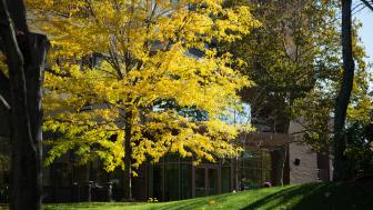 Tree on Doble quad with yellow leaves