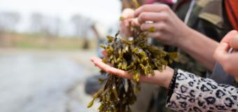 Closeup of a student holding seaweed
