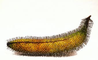 banana with pins in it in front of white background