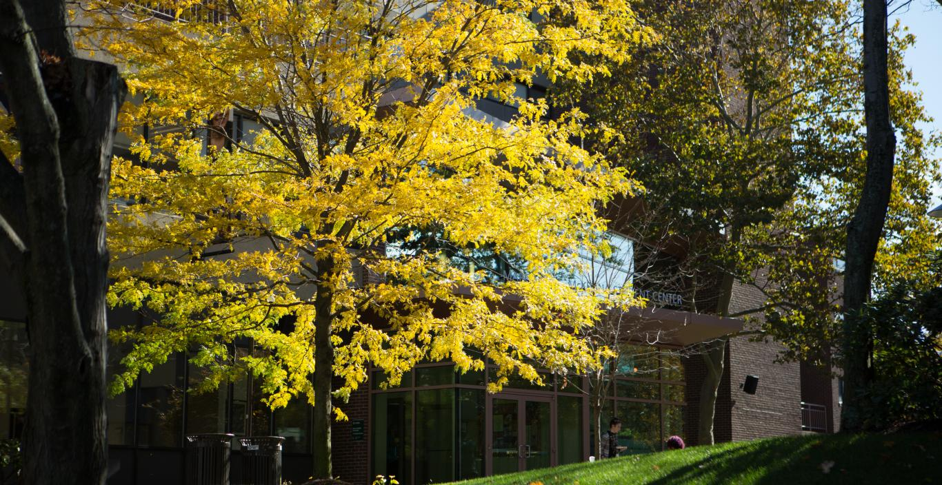 Beautiful yellow tree on Lesley's campus in the Fall
