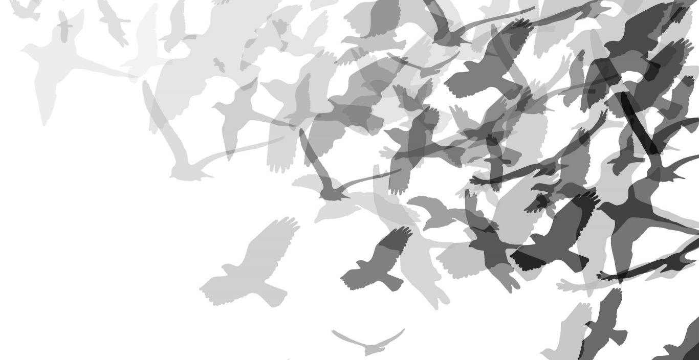 black and gray illustration of flock of birds taking flight