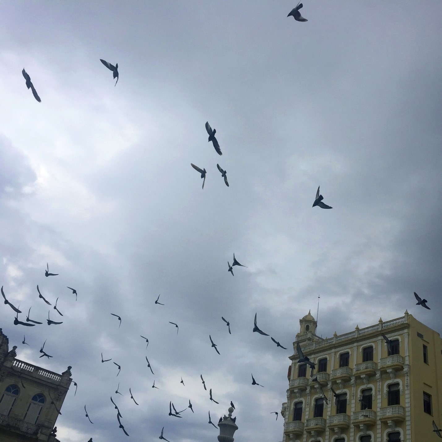 A flock of seagulls in the sky over a building in Havana