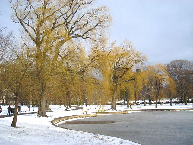 Snow and ice in Boston's public garden